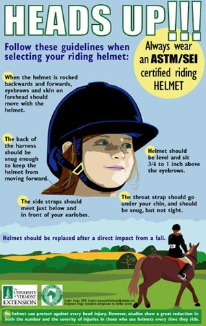 Image result for horse  helmet safety