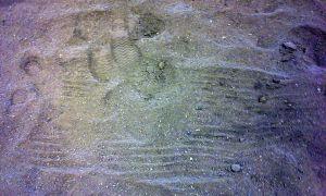tracks (11)b